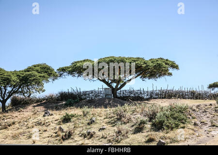 From Arba Minch to Addis Ababa - Stock Photo