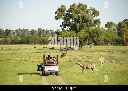 Animal World Game Park, Emerald Resort & Casino, Vanderbijlpark, Emfuleni Municipality, Gauteng,  Republic of South - Stock Photo