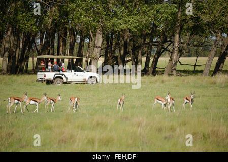 Animal World Game Park, Emerald Resort & Casino, Vanderbijlpark, Emfuleni Municipality, Gauteng,  Republic of South Africa Stock Photo
