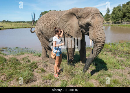 Woman with elephant at Knysna Elephant Park, Plettenberg Bay, Knysna, Knysna Municipality, Western Cape Province, - Stock Photo