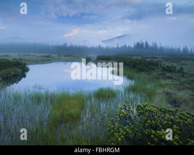 Sunrise in the nature reserve Siebenmöser, Kitzbühel Alps, moor, Hochkrimml, Gerlosplatte, Salzburg, Austria - Stock Photo