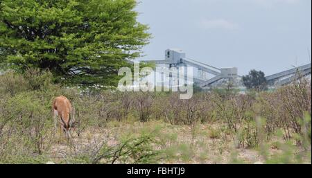 Jwaneng, Botswana. 16th Jan, 2016. A sprinbok is seen in Jwana Game Park within the boundaries of the Jwaneng mining - Stock Photo