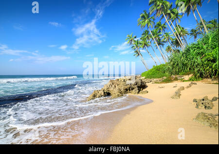 Green palm trees on the beach of Gala - Stock Photo