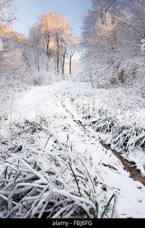 View of beech woodland ride track path in winter snow - Stock Photo