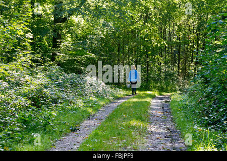 Rear view of woman in blue jacket walking down road through green, lush forest with a basket in search of mushrooms. - Stock Photo
