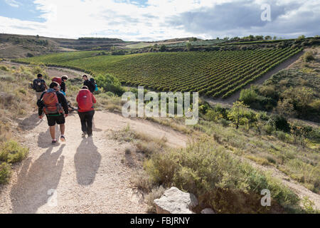 Group of pilgrims walking through vineyards between the villages of Torres Del Río and Viana in Navarre, Spain. - Stock Photo