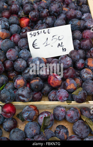 Trays of plums on sale on a stall at the weekly market, Siena, Tuscany, Italy - Stock Photo