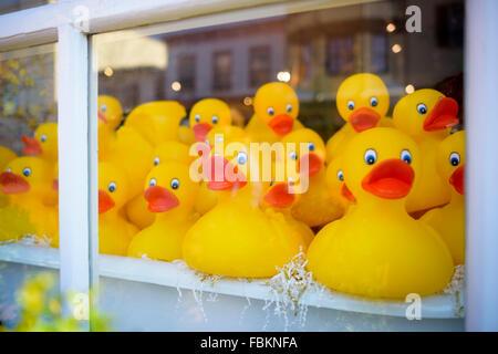 Window display of yellow rubber ducks. - Stock Photo