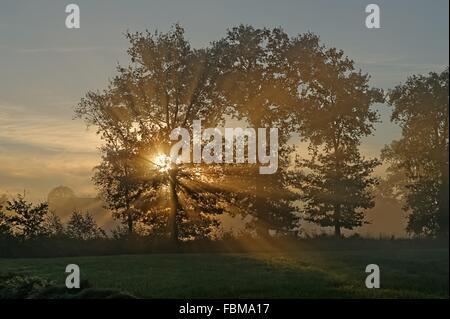 Light shining through trees on misty morning, Neermoor, Lower Saxony, Germany - Stock Photo