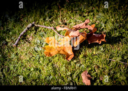 Morning winter sunshine on a fallen leaves in a West Sussex garden. - Stock Photo