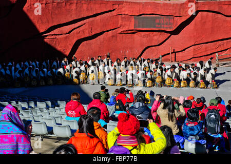 Jade Dragon Snow Mountain,Ethnicity show designed by Mr Li Jing Yenxung,who mastered Beijing Olympics,Lijiang,Yunnan,PRC,China - Stock Photo