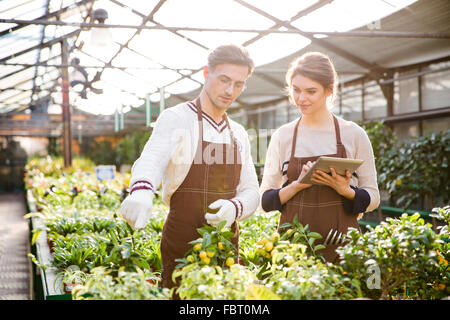 Serious male and female gardeners in brown aprons discussing plants and flowers and using tablet in orangery - Stock Photo