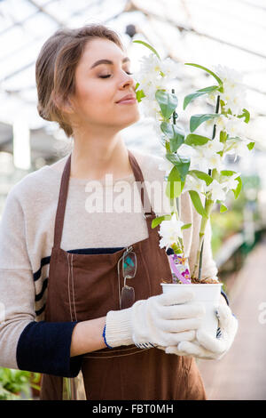 Cute lovely young woman gardener in brown apron and garden gloves holding and smelling flowers of ochid in orangery - Stock Photo