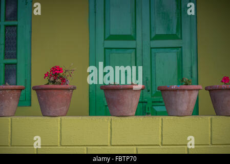Vibrant yellow painted wall and bright glossy green door. Potted geranium plants lined up on a ledge. A feast of - Stock Photo