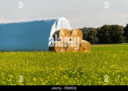 Bales of straw - Stock Photo