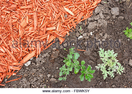 Dirt and mulch - Stock Photo