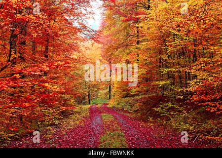 Colourful autumn forest road in October - Stock Photo