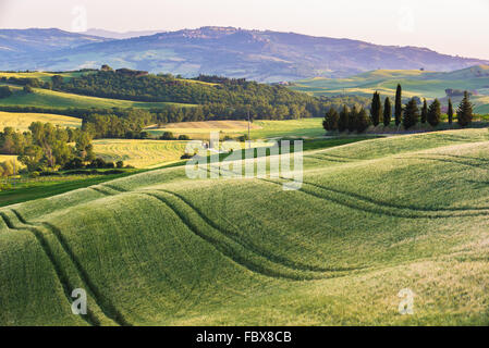 Quiet summer field in Tuscany - Stock Photo
