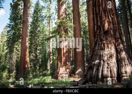 Yosemite Bachelor - Stock Photo