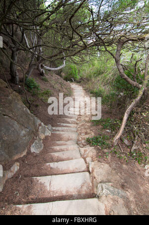 Rock stairs in the forest - Stock Photo