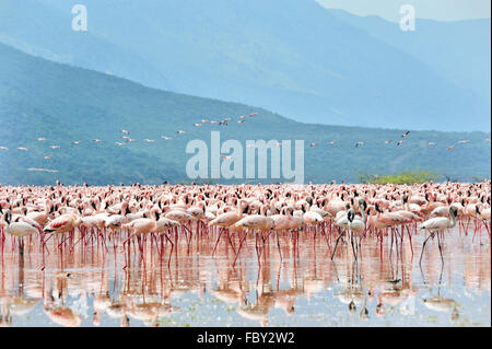 Flamingos in Great Rift Valley - Stock Photo