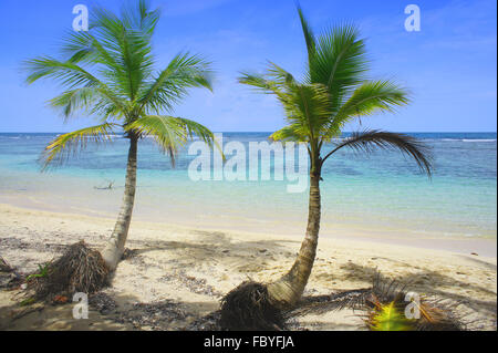 palm leaf at caribbean beach - Stock Photo