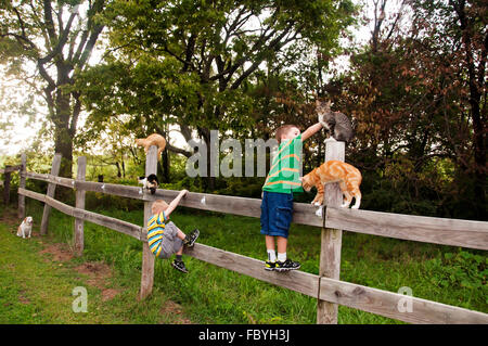 kids and cats on wooden fence under the eye of a watchful dog - Stock Photo