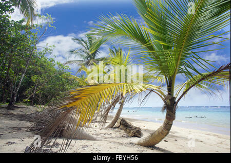 Impressions from Costa Rica - Stock Photo