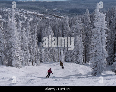 Skiers descend the Frying Pan Trail, Morningside Park, Steamboat Ski Resort, Steamboat Springs, Colorado. - Stock Photo