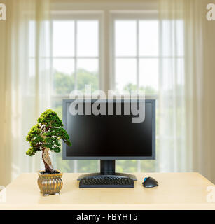 A bonsai tree by an office window Stock Photo Royalty Free Image