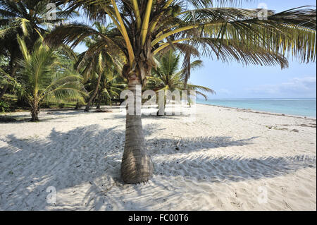 Palm view to the Sea on white sandy Beach - Stock Photo