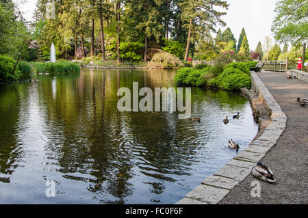 ... Lake And Ducks At Crystal Springs Rhododendron Garden, Portland,  Oregon, USA   Stock