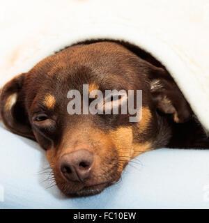 mixed dog sleeping on bed at home