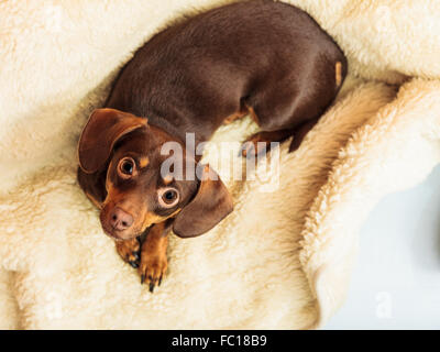 mixed dog relaxing on bed at home