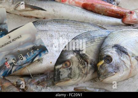Fresh fish on a makert. Daurade Royale. - Stock Photo