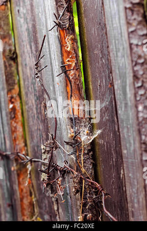 Colorful wooden planks of fence and fragment of barbed wire - Stock Photo