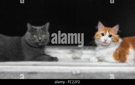 Two cats, grey and orange, on window in evening
