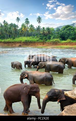 Herd of elephants in river of jungle - Stock Photo