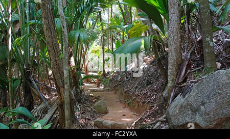 valle de mai national park - Stock Photo