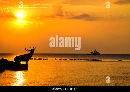 Red deer bellowing at sunset in the wild - Stock Photo