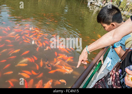 Mother points to Koi fish in West Lake, a freshwater lake in Hangzhou, the capital of Zhejiang province in eastern - Stock Photo