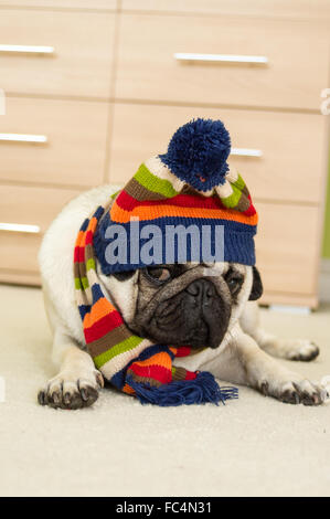 A Pug dog wearing a winter hat and scarf - Stock Photo