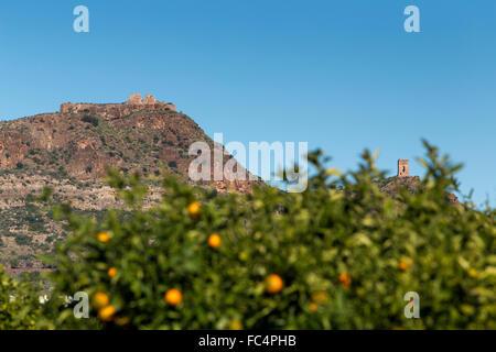 Spanish hilltop castles and orange trees groves - Stock Photo