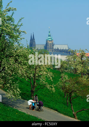 Family on walkway among apple trees in blossom on Petrin Hill in Prague with St Vitu s Cathedral and Hradcany Castle - Stock Photo