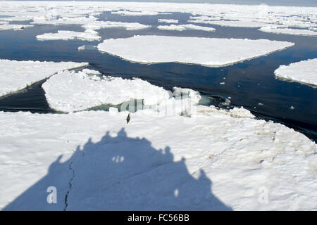 Shadow of cruise ship with passengers ramming ice floe with adelie penguin in Antarctica. - Stock Photo