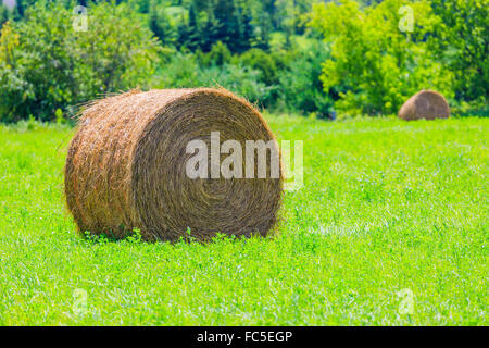 Round hay bales on the green field - Stock Photo