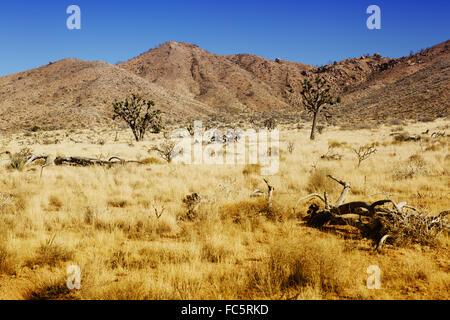 desert in california - Stock Photo