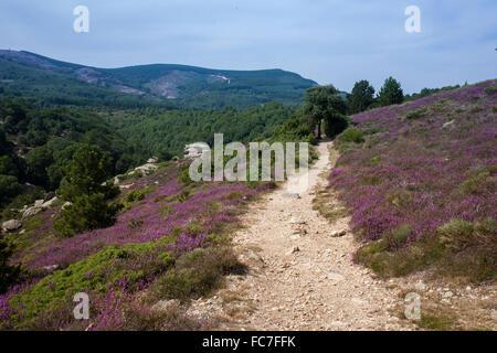 Dirt path on rural hillside - Stock Photo
