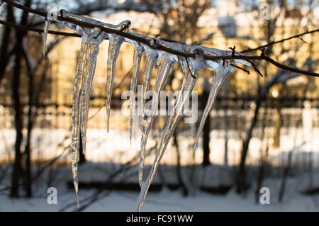Icicle on single branch. Horizontal view. Close up. Sunny day - Stock Photo