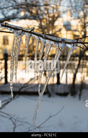 Icicle on single branch. Vertical view. Close up. Sunny day - Stock Photo